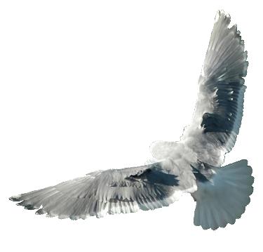 dove-logo-cutout-twide